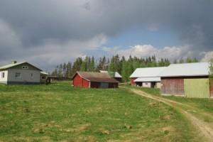 Metsää 52,7 ha ja vanhat maatilan rakennukset
